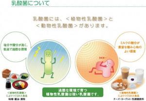 植物性乳酸菌